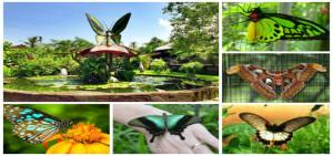 Bali-Butterfly-Park-898x421